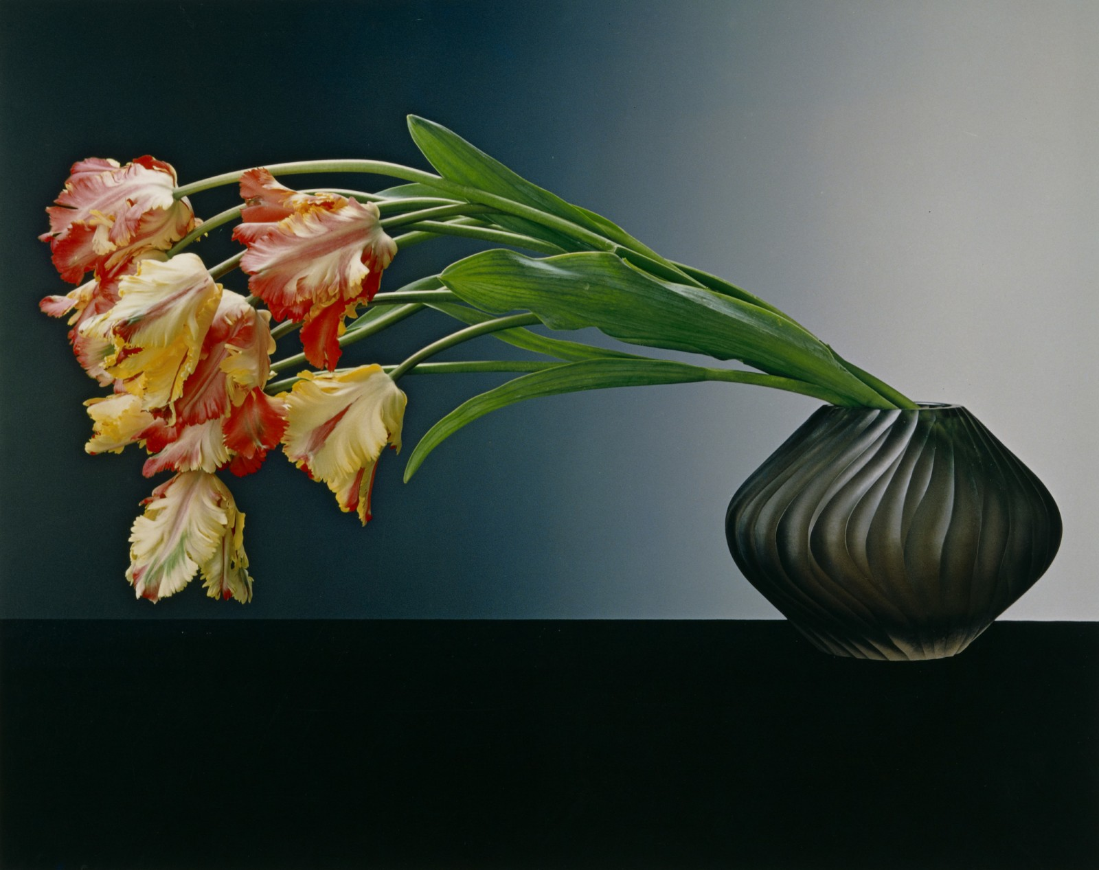Image: Robert Mapplethorpe, Parrot Tulips, 1988